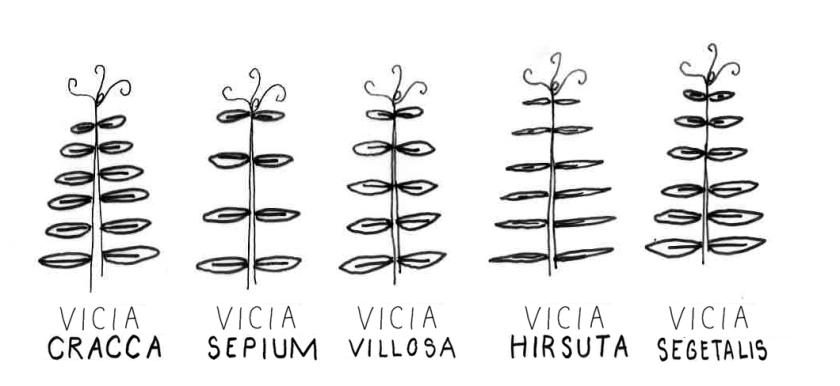 differentes vesces