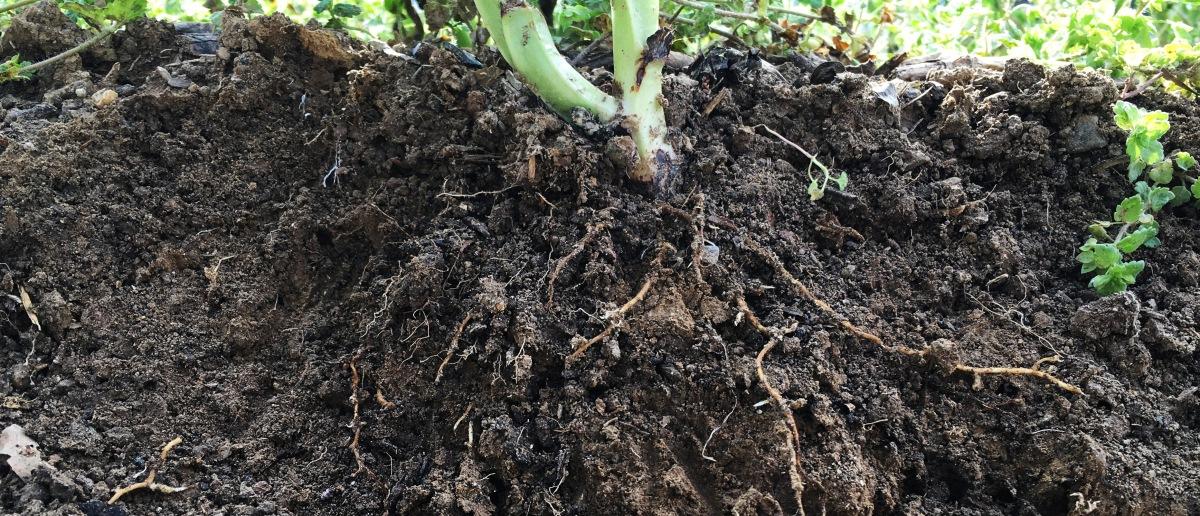 Jardiniers des racines